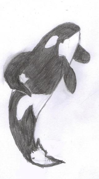 (dessin) dessin d'orque Orcas11