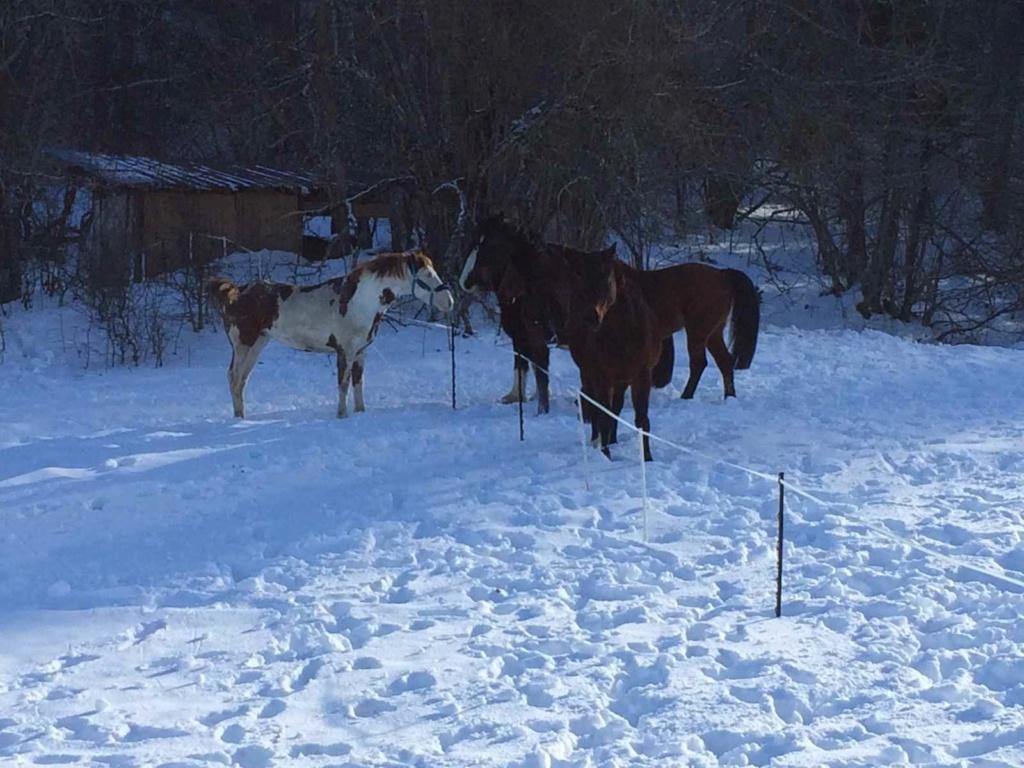 Dept19-6 ans- COYOTTE C-D- Paint horse-réservé par Steff39 (Janvier 2019) Coyott16