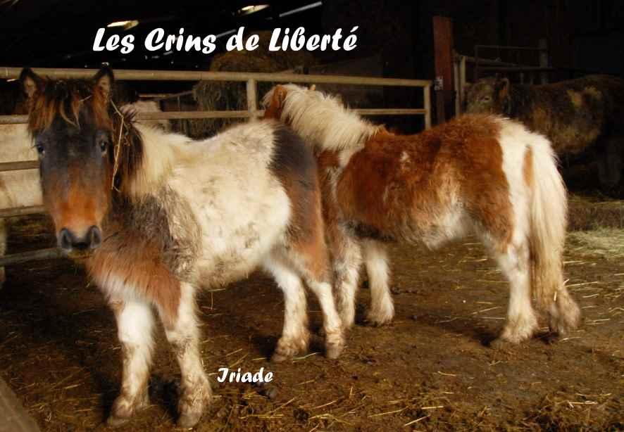 Dept19-ITAK & IRIADE- poney ONC- Réservés par Steff39 (janv 2019) Iriade10