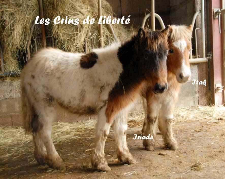 Dept19-ITAK & IRIADE- poney ONC- Réservés par Steff39 (janv 2019) Iriade12