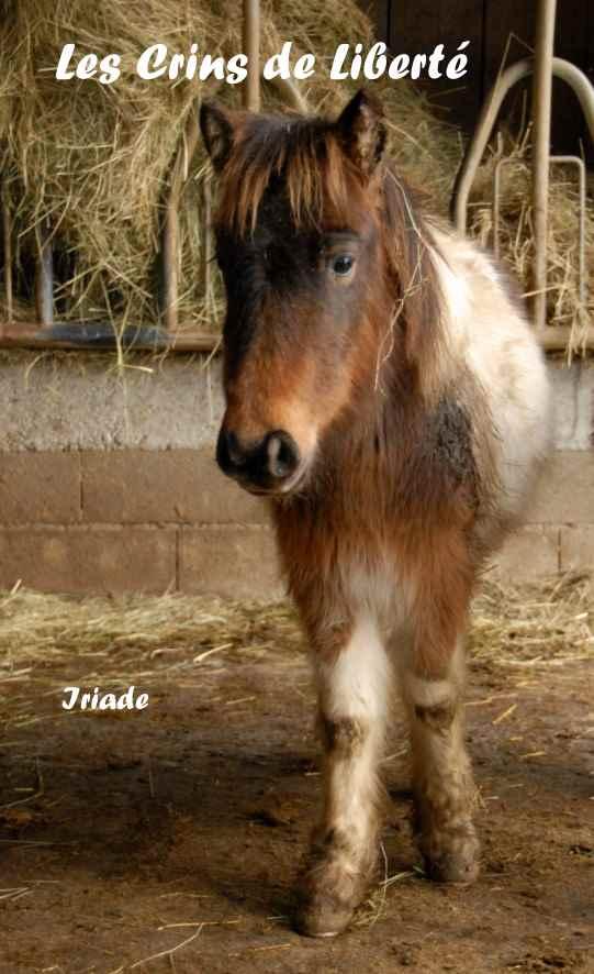 Dept19-ITAK & IRIADE- poney ONC- Réservés par Steff39 (janv 2019) Iriade13