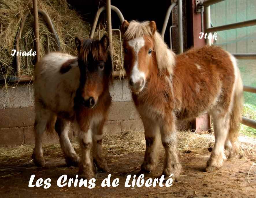 Dept19-ITAK & IRIADE- poney ONC- Réservés par Steff39 (janv 2019) Itak_e10