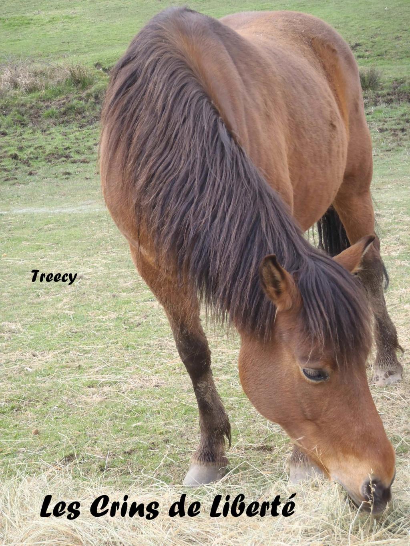 Dept19-12 ans-TREECY-ONC-sauvée par Perscillia89 !!! (nov 2019) Treecy13