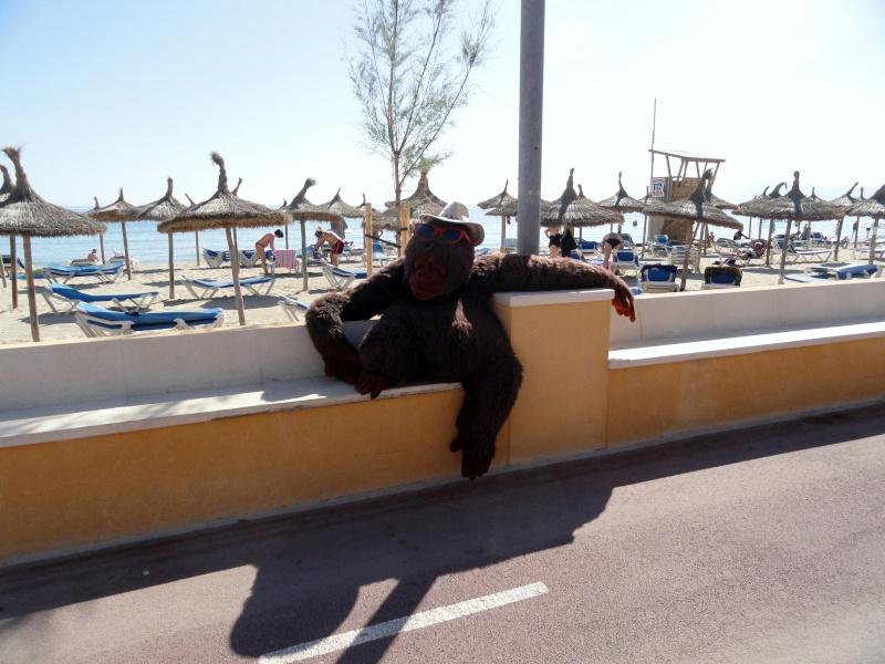 Ca'n Picafort, Son Baulo stroll to Ca'n Picafort Dsc03317