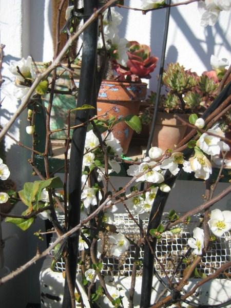 Flores de temporada 318