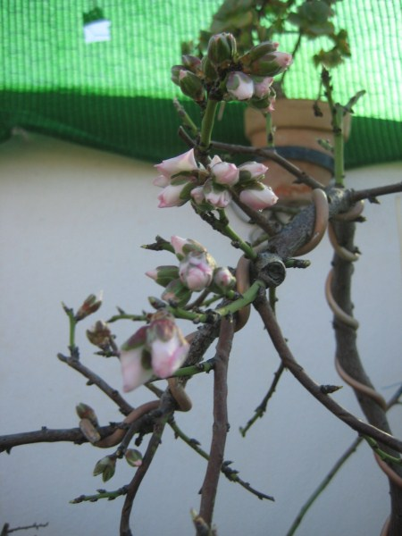 Flores de temporada 518
