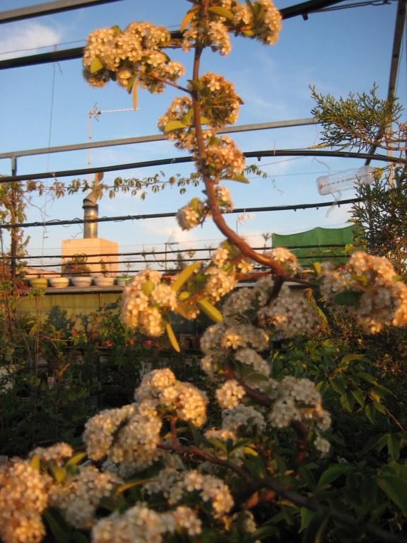 Flores de temporada Pira10