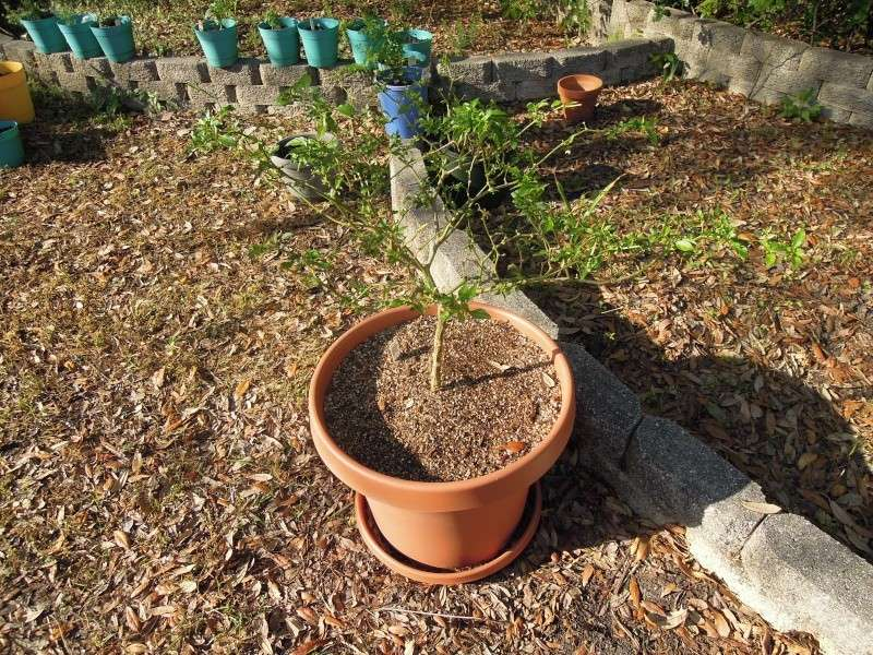 My Garden Update, Show me yours Dscn0448