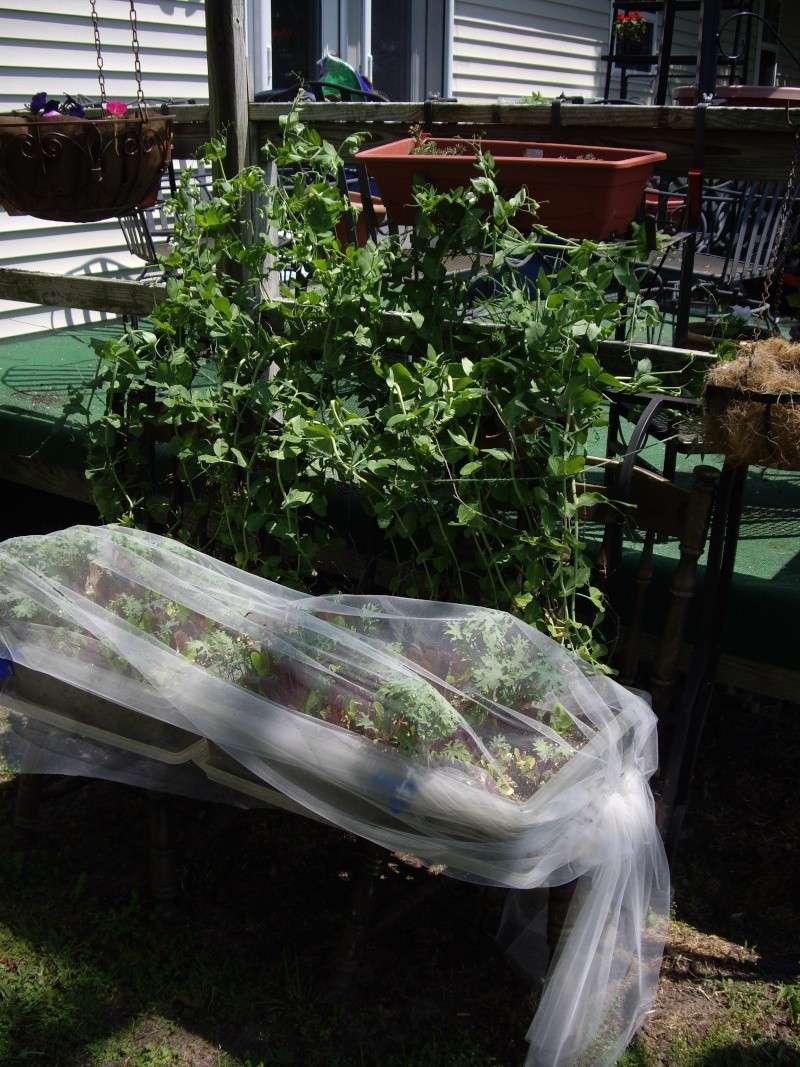 garden vs trays question Imgp1410