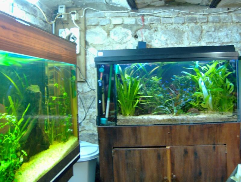 fishroom perso Hpim0111