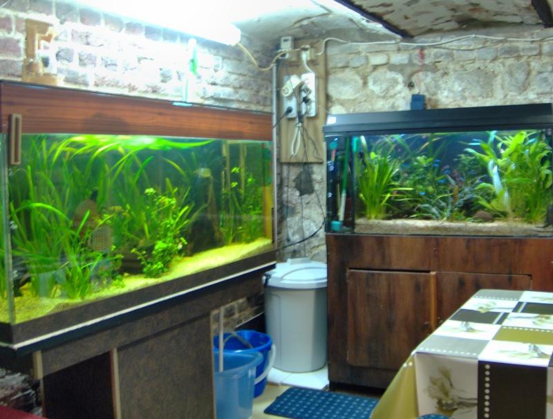 fishroom perso Hpim0112