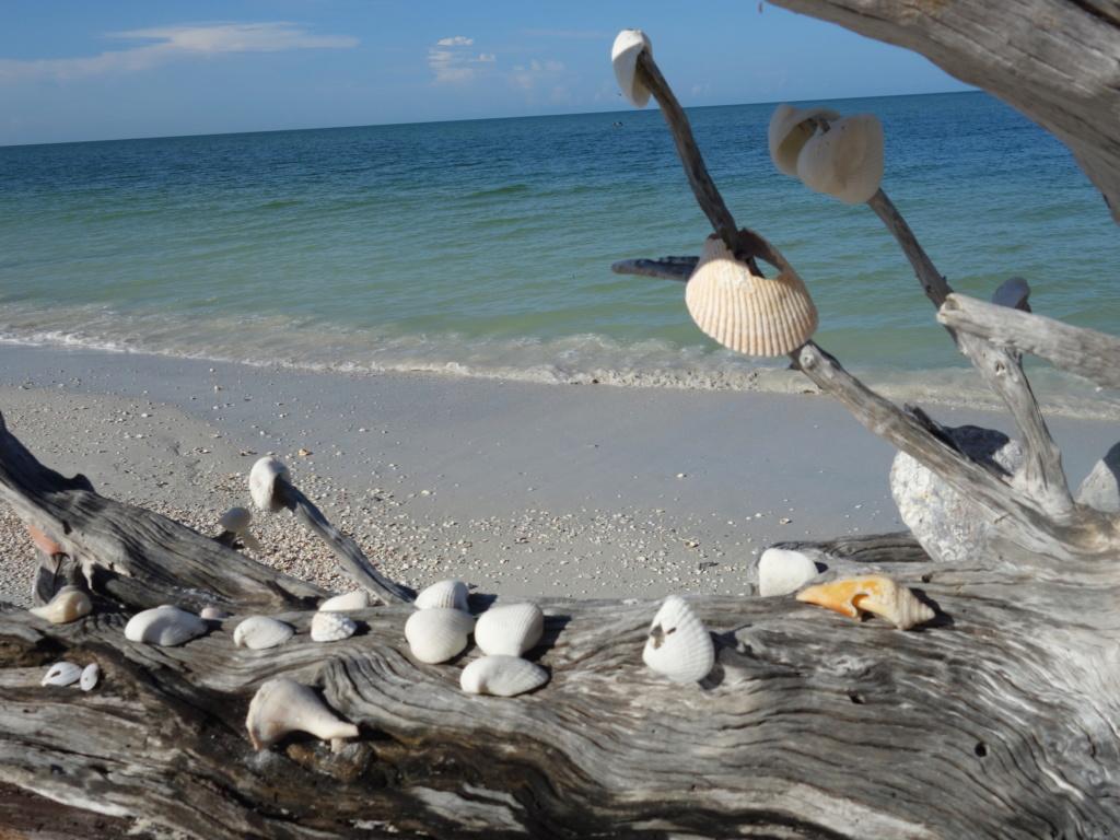 Floride Juillet 2019 : De nouvelles aventures en famille - Page 2 Lovers18
