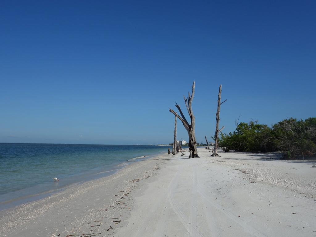 Floride Juillet 2019 : De nouvelles aventures en famille - Page 2 Lovers19