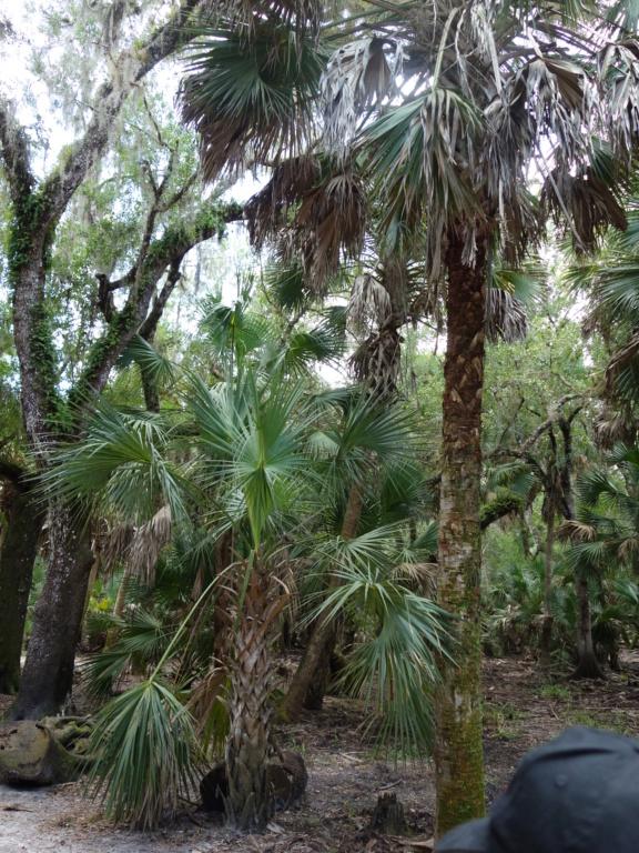 Floride Juillet 2019 : De nouvelles aventures en famille - Page 2 Myakka10