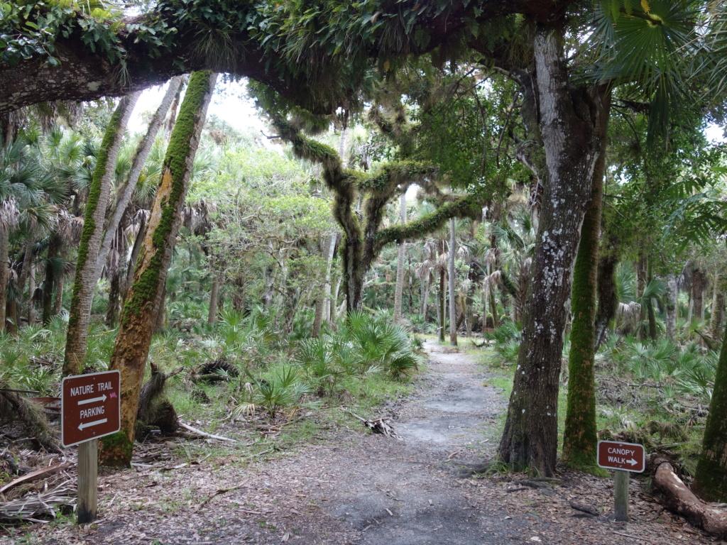 Floride Juillet 2019 : De nouvelles aventures en famille - Page 2 Myakka11