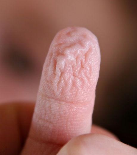 Le mystère des doigts fripés sous l'effet de l'eau enfin résolu  Un-doi10