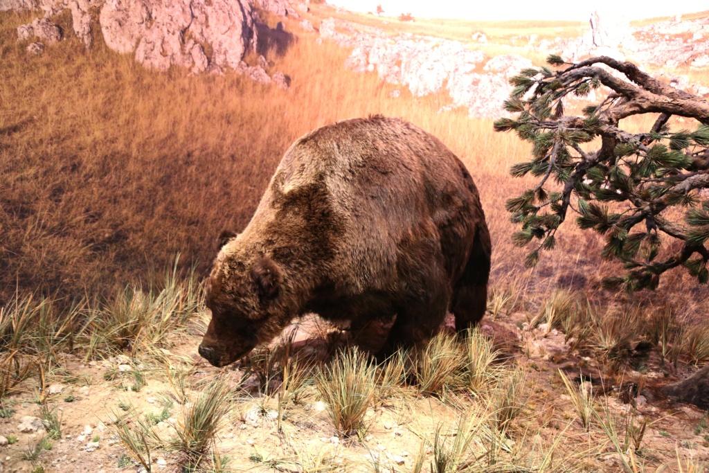 reconstitution d'animaux de la préhistoire  Grotte10