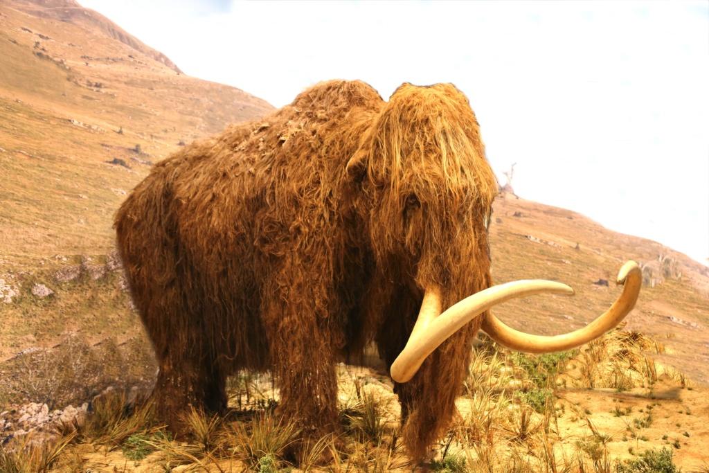 reconstitution d'animaux de la préhistoire  Img_5811
