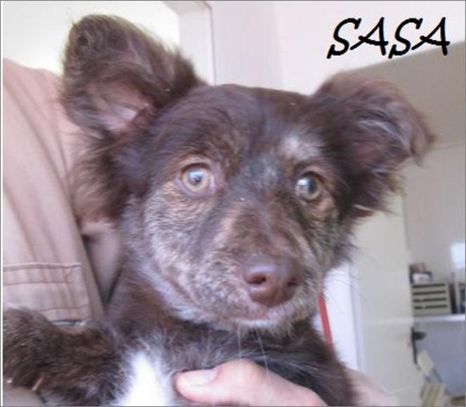 SASA - CROISEE PAPILLON (ES)-R- Image614
