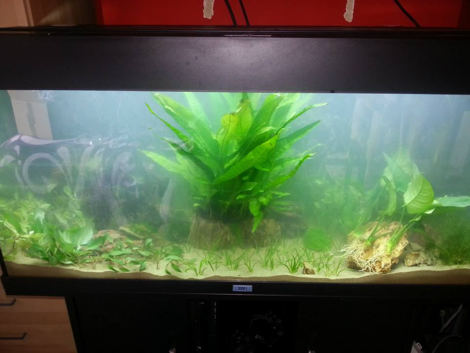 Problème d'algues avec tubes LED du Rio180 10360510