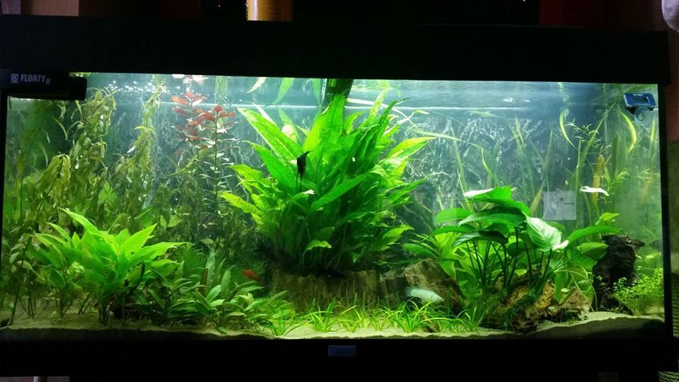 Problème d'algues avec tubes LED du Rio180 10628410