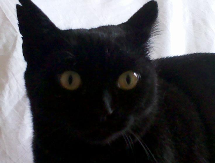 Publié le Magnifique chatte, cest a croquer.