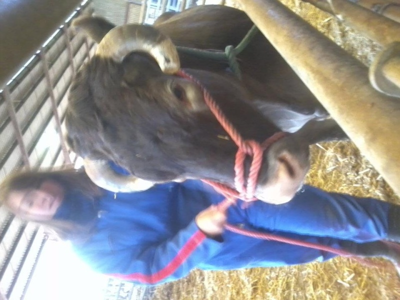 Les vaches(Alias Makoumou) 30225910