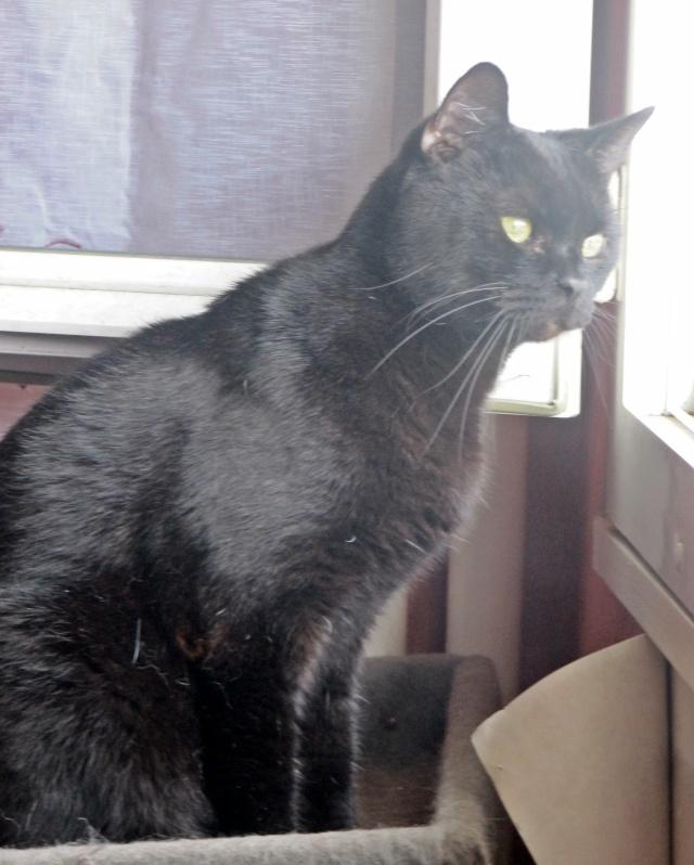 Phénix - Noir - né en 2008 en FA chez Nathou - Page 2 Diver156