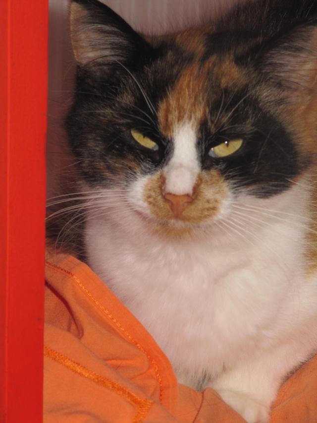 Malice - Tricolore  poils mi-longs - née en 2010*** Divers84