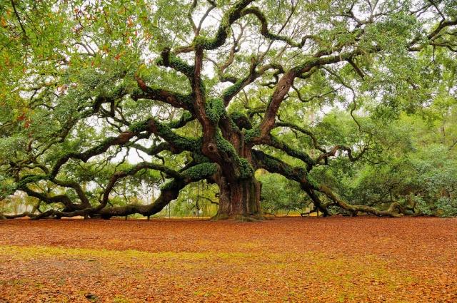 Se relier à un arbre 003a6810
