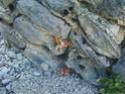 [MTPA] les tout petits amis de Marmotte Photos47