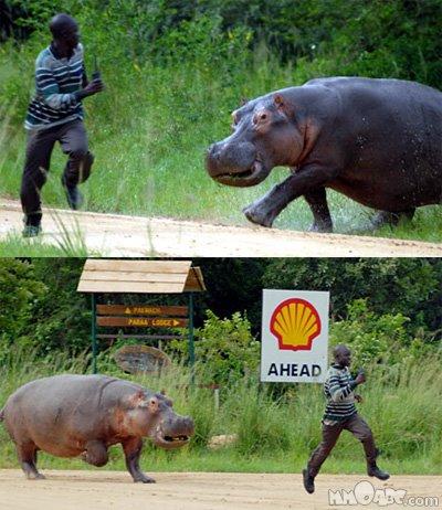 world dangerous animal 810