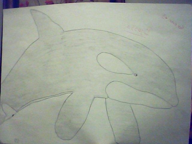 (dessin) dessin d'orque Snapsh14