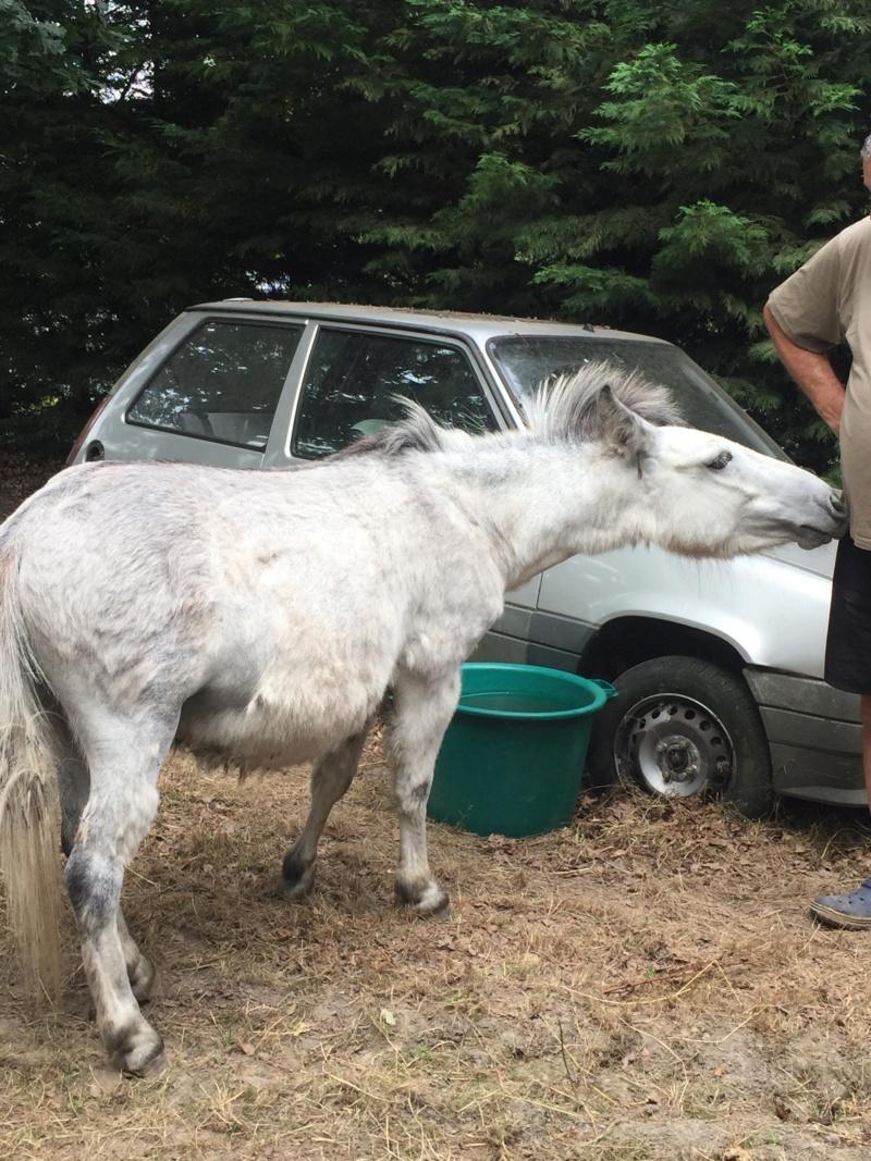 IDAO - bardot gris - 4 ans 37383411