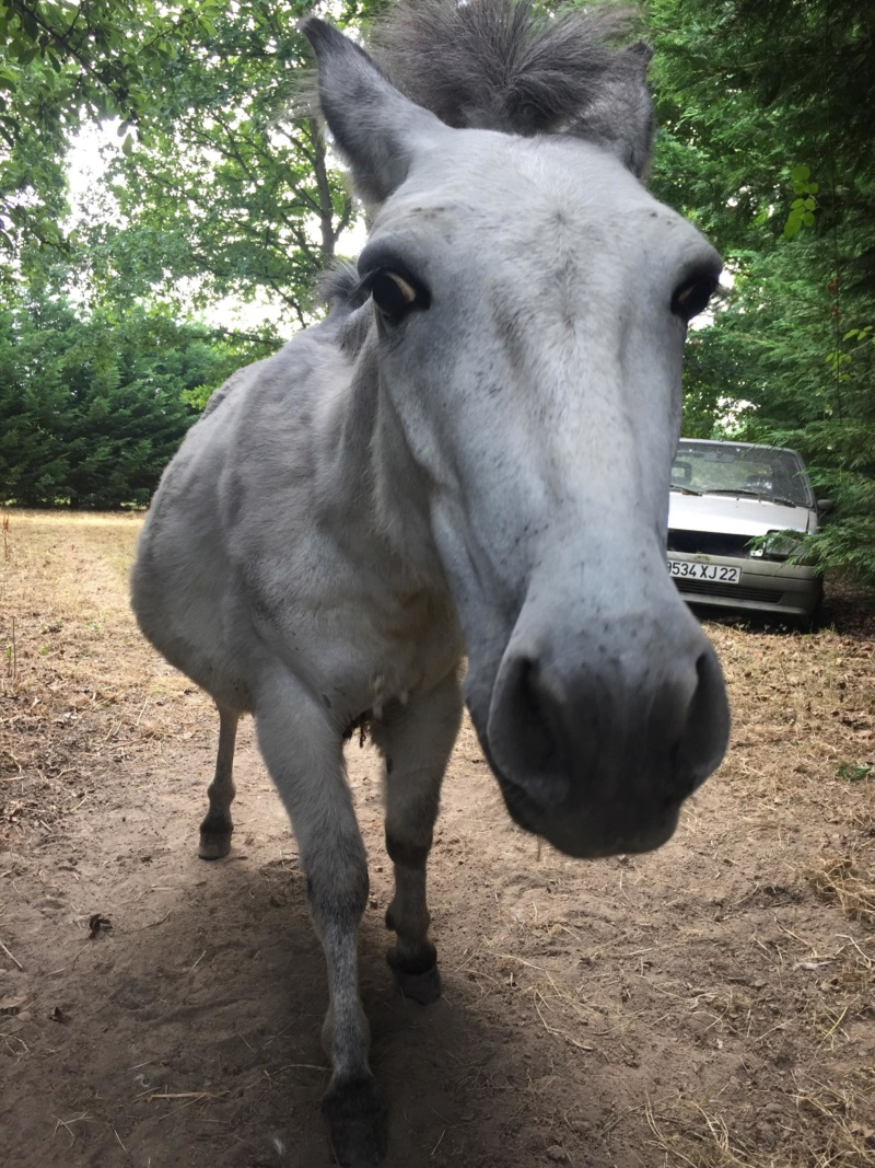 IDAO - bardot gris - 4 ans (réservé) 37804211