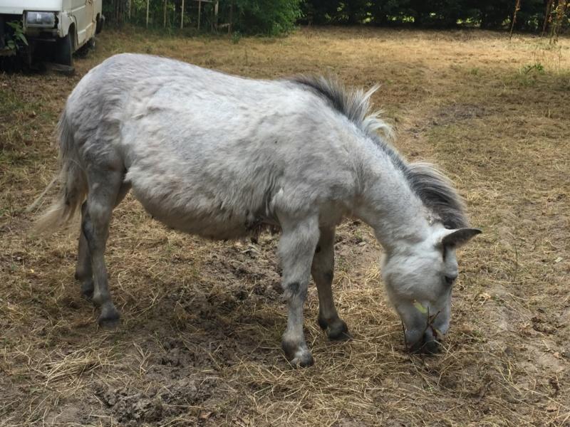 IDAO - bardot gris - 4 ans (réservé) 38212410