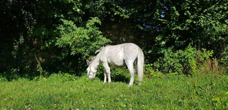 IDAO - bardot gris - 4 ans (réservé) 38298010