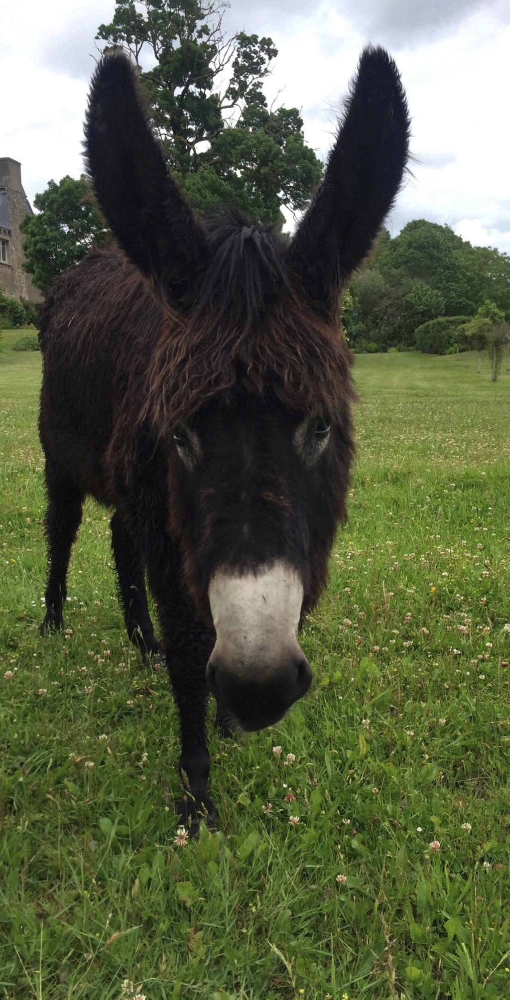 HASHTAG - âne mâle noir - 2 ans 62234910