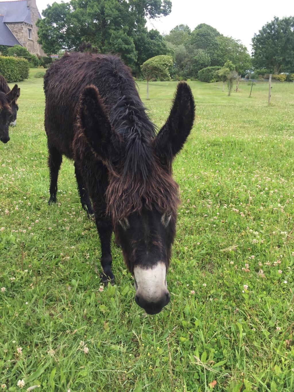 HASHTAG - âne mâle noir - 2 ans 62241110