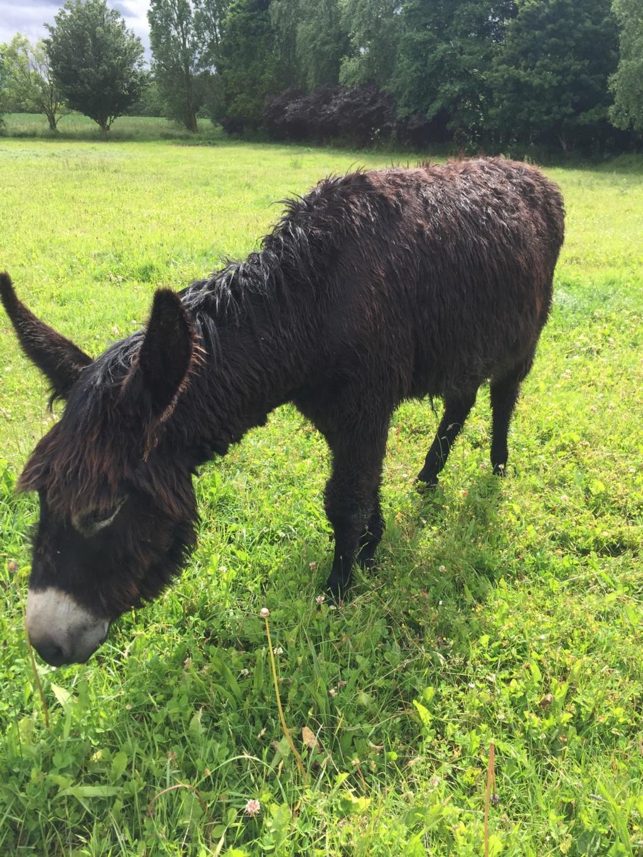 HASHTAG - âne mâle noir - 2 ans 62244910