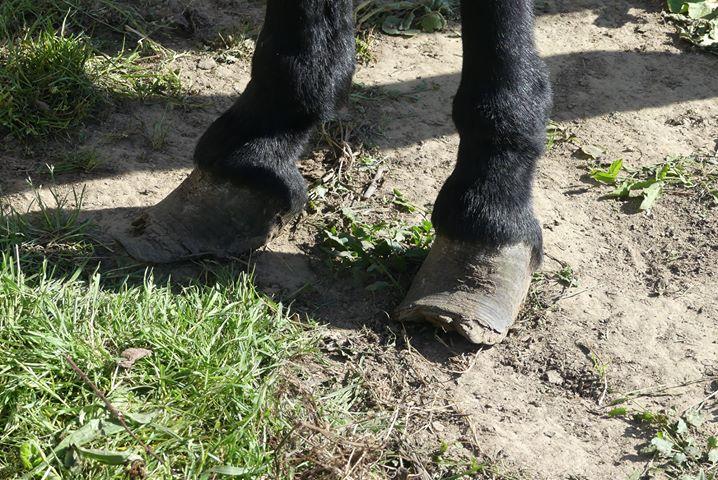PACO - âne mâle noir - 5 ans 72070210