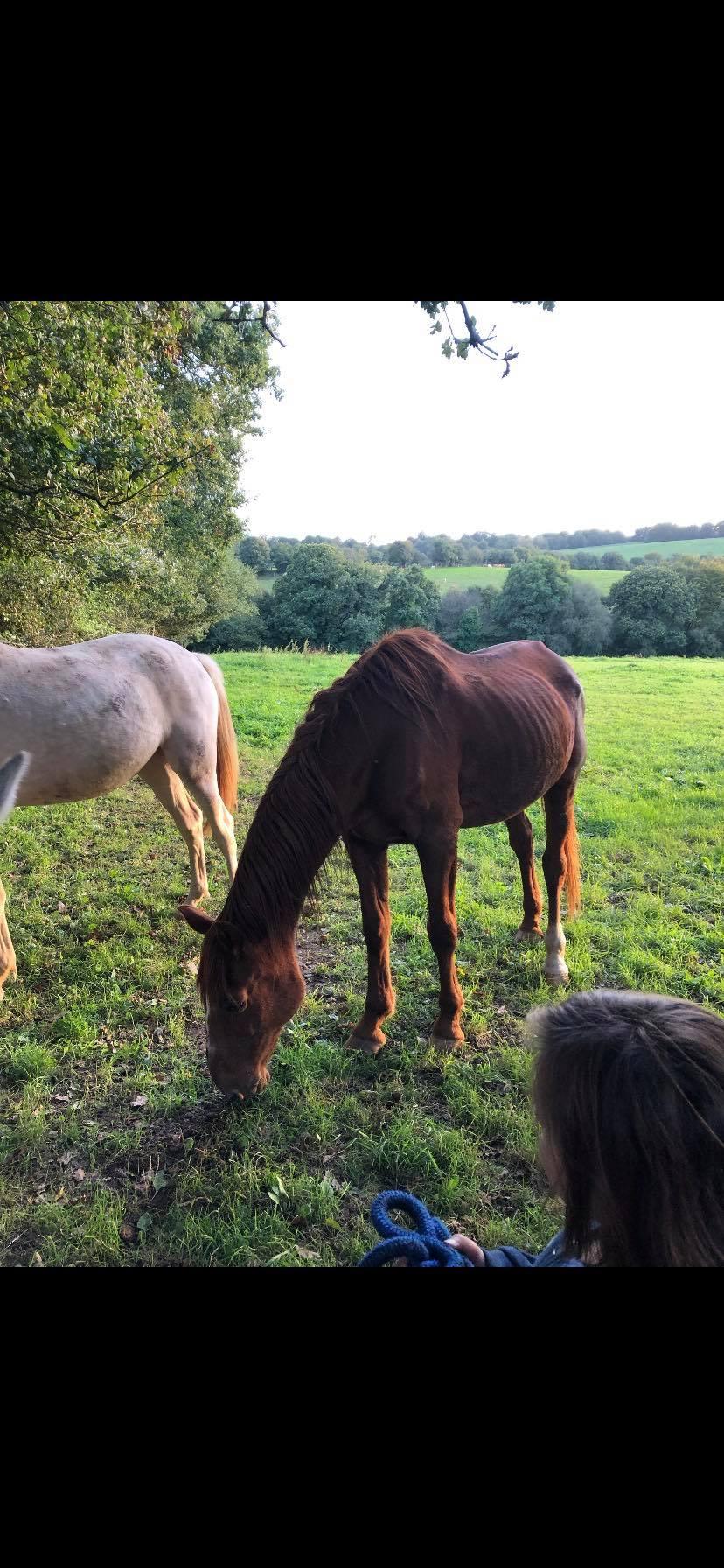 BELLOU - cheval alezan - 30 ans (FA longue durée) 72299910