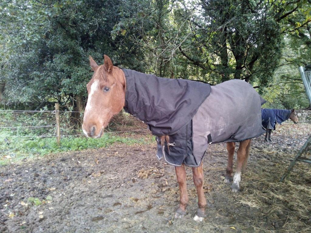 BELLOU - cheval alezan - 30 ans (FA longue durée) Bellou11