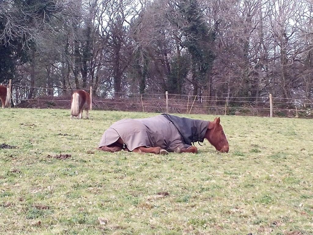 BELLOU - cheval alezan - 30 ans (FA longue durée) Bellou14