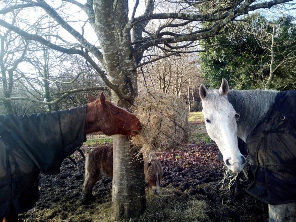 BELLOU - cheval alezan - 30 ans (FA longue durée) Bellou16
