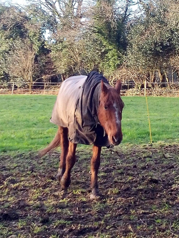 BELLOU - cheval alezan - 30 ans (FA longue durée) Bellou17