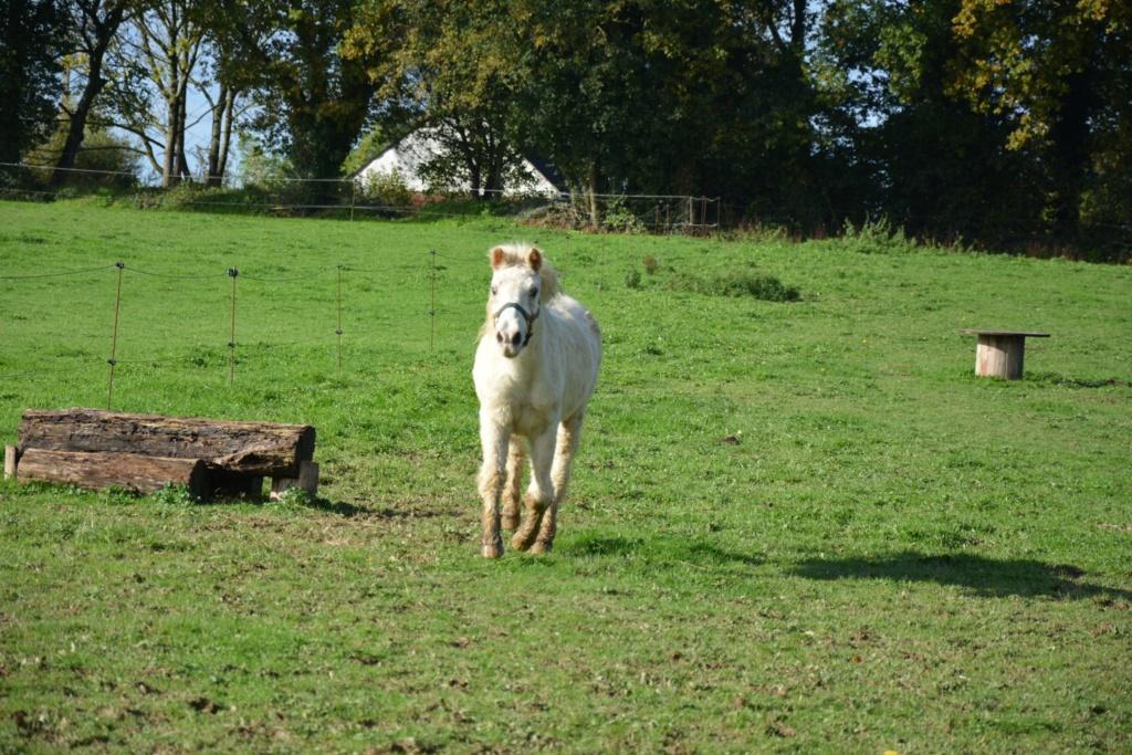 FANNY - ponette blanche - 35 ans (FA longue durée) - Page 2 Fanny_20