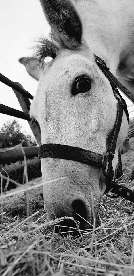 IDAO - bardot gris - 4 ans (réservé) Idao_214
