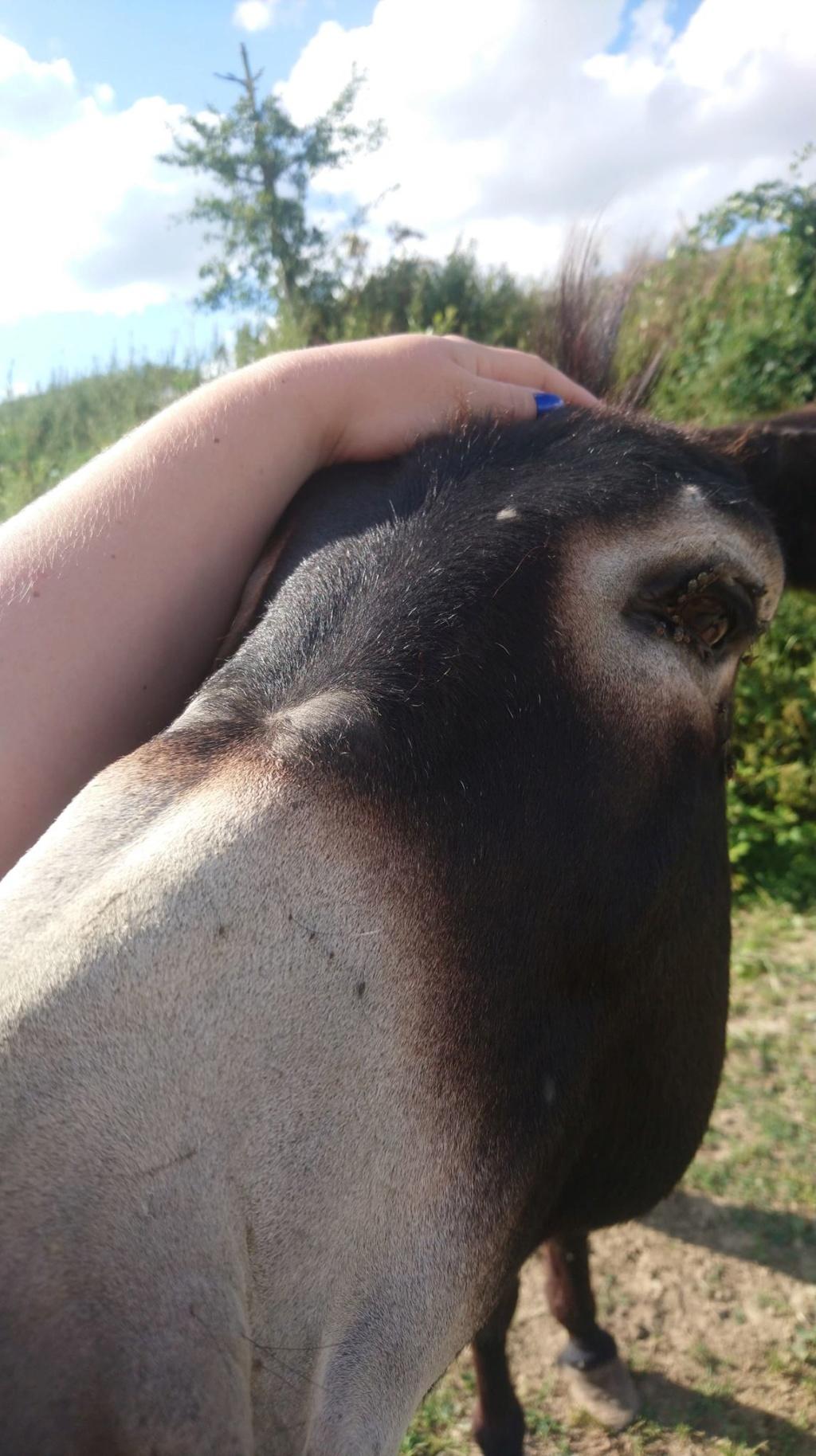 JUSTIN - âne mâle noir - 10 ans Justin13