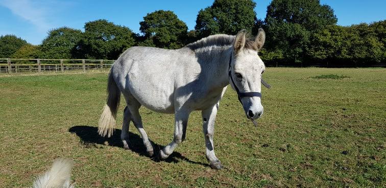 IDAO - bardot gris - 4 ans (réservé) Receiv10